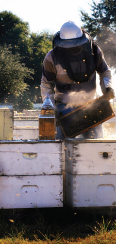 Umatilla Gold | Beekeeper BILL RHODES | Photo by John Jernigan