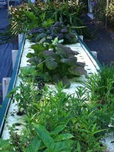 Maria's Garden_vert