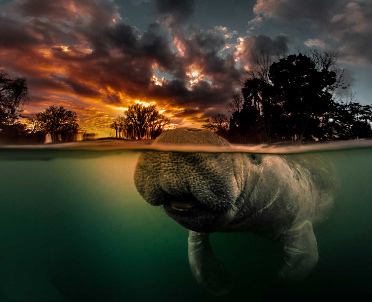 Swimming With Manatees (or Not)