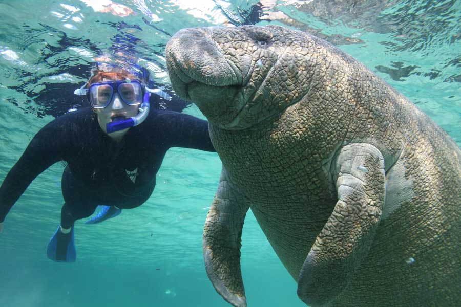 manatee-and-man-at-play