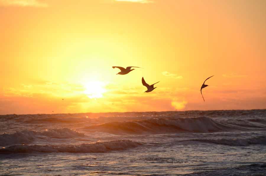 OUT_ABOUT-0216-Daytona-DaytonaShores_Sunrise