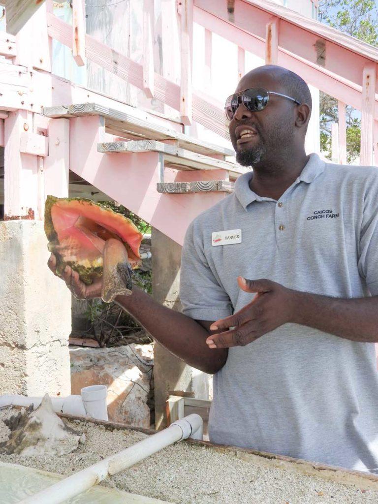 Danver Fortune At The Caicos Conch Farm